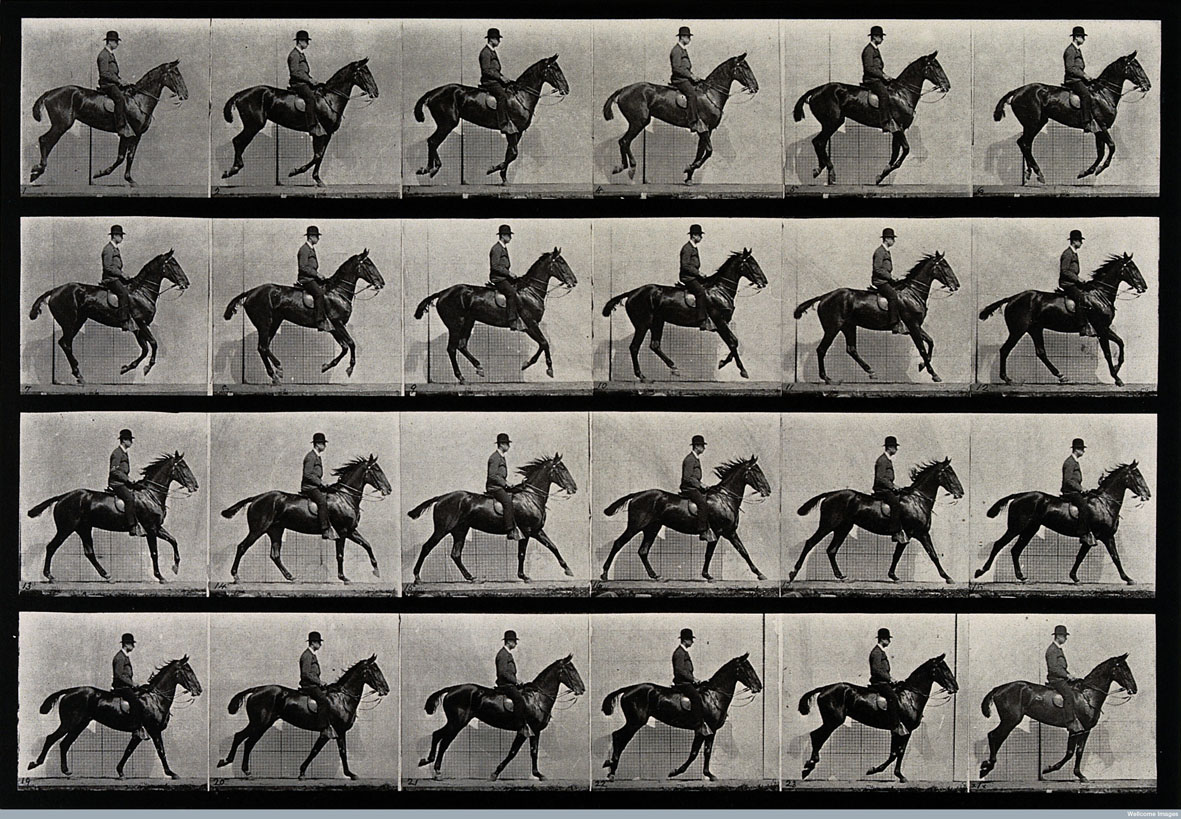V0048752 A cantering horse and rider. Photogravure after Eadweard Muy Credit: Wellcome Library, London. Wellcome Images images@wellcome.ac.uk http://wellcomeimages.org A cantering horse and rider. Photogravure after Eadweard Muybridge, 1887. 1887 By: Eadweard Muybridge and University of Pennsylvania.Published: 1887  Copyrighted work available under Creative Commons Attribution only licence CC BY 4.0 http://creativecommons.org/licenses/by/4.0/